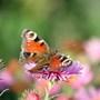 Schmetterlinge sind eine wunderschöne Symbolik für Entwicklung und Entfaltung